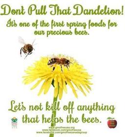 Dandelions_Bees