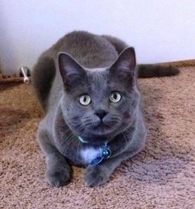 Marcus the cat